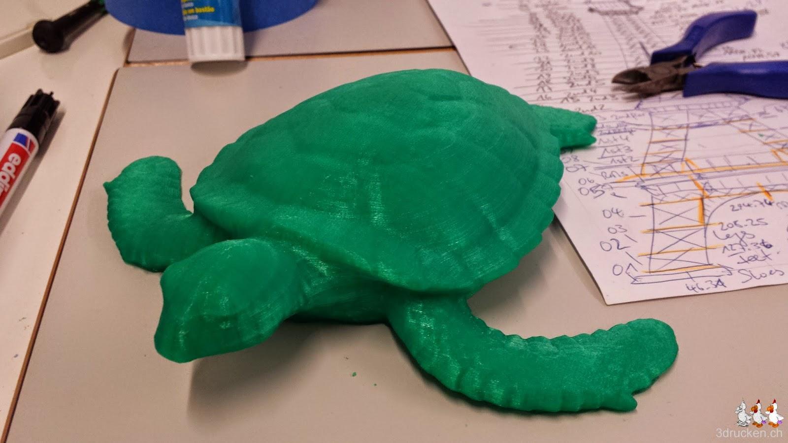 Foto von der Schildkröte die wir ohne Verletzung vom Drucktisch lösen konnten